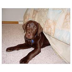 Labrador Bed Bug Poster