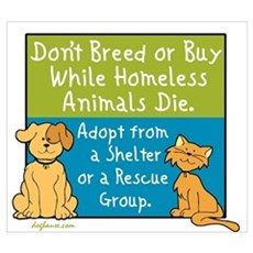 Adopt Shelter Rescue Poster