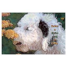 Portuguese Water Dog Take a B Poster