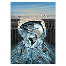Salmon breaks Dam Poster
