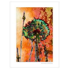 Giant Dandelion 9w x 12h Poster