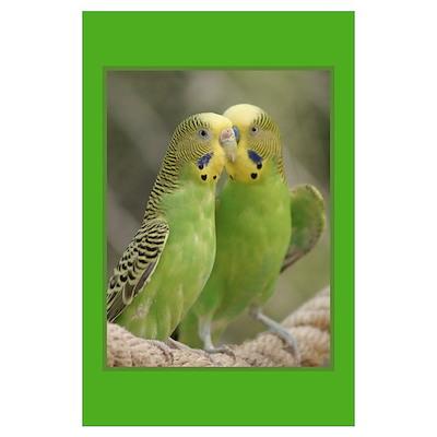 Parakeet Gifts Poster