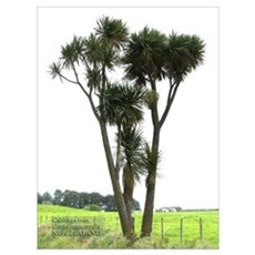 NZ Cabbage Tree Framed Print