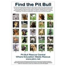 Find the Pit Bull Framed Print