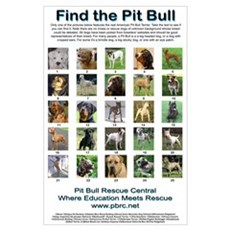 Find the Pit Bull Poster