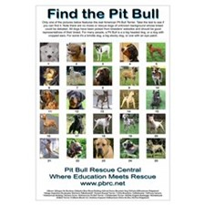 Find the Pit Bull