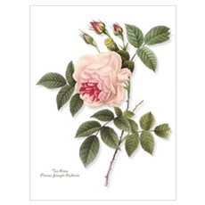Tea Rose Canvas Art