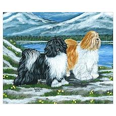 Tibetan Terrier Poster