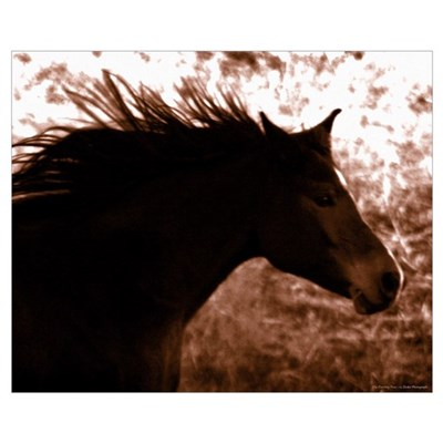 Horse Photography Poster