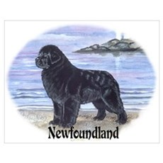 Newfoundland Dawn Patrol Poster