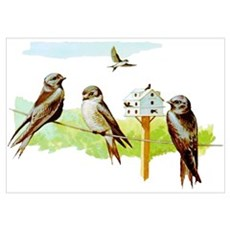 Purple Martin Bird Poster
