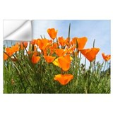 California poppy Wall Decals