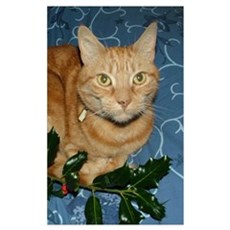 Ginger Cat & Holly Framed Print