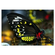 Butterfly Magnificant Canvas Art