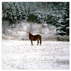 Horse in snow Framed Print