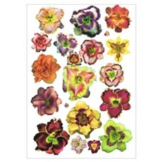Assorted Daylilies Poster