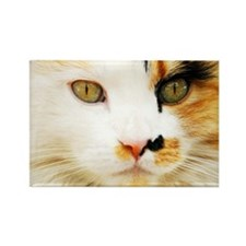 Calico Cat Rectangle Magnet (100 pack)