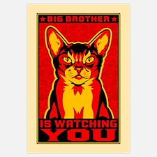 CAT - Big Brother Propaganda