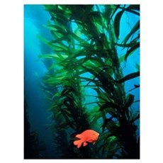 Kelp Scene Canvas Art