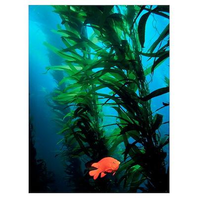 Kelp Scene Poster