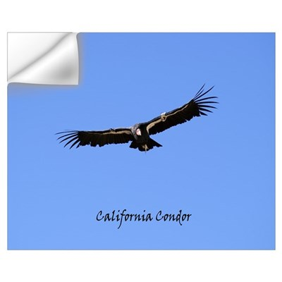 California Condor Wall Decal