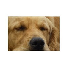 Golden Retriever sleeping Rectangle Magnet