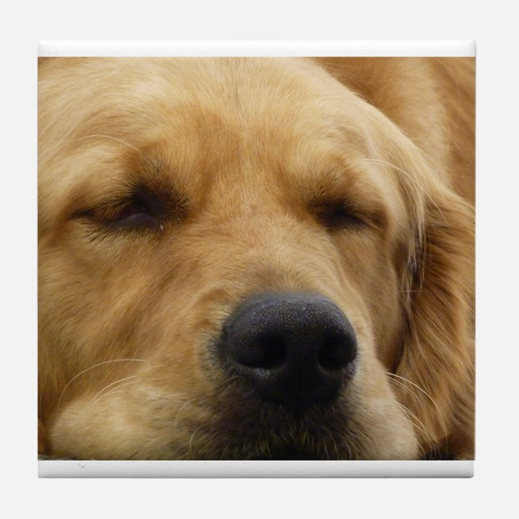 Golden Retriever sleeping Tile Coaster