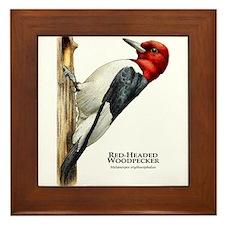 Red-Headed Woodpecker Framed Tile
