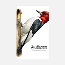 Red-Headed Woodpecker Decal