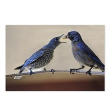 Mama and Baby Blue Bird Postcards (Package of 8)