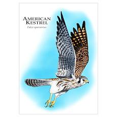 American Kestrel Poster