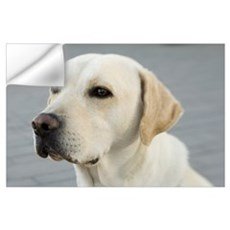 Labrador Wall Decal