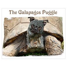 Galapagos Puggle Poster