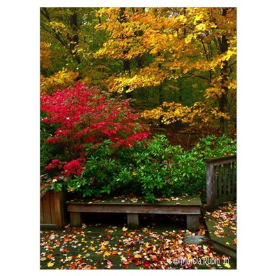 BACKYARD COLORS Poster