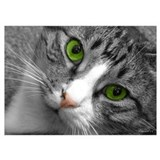 Cat Wrapped Canvas Art