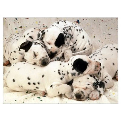 DALMATION PUPPY PILE Canvas Art