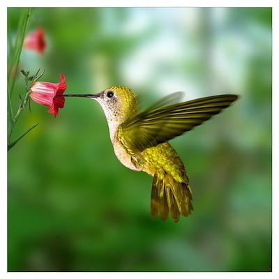 Bird Photo Poster