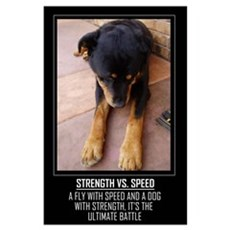 Strength vs. Speed Poster