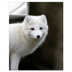 Arctic Fox Wall Decal