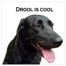 drool is cool Poster
