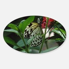Butterflies/Winged Creatures Oval Decal