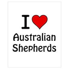 Australian Shepherds Poster