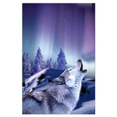 Winter Wolf Poster