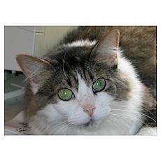 Darma: DLH Cat Poster