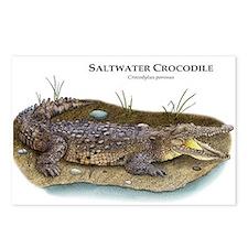 Saltwater Crocodile Postcards (Package of 8)