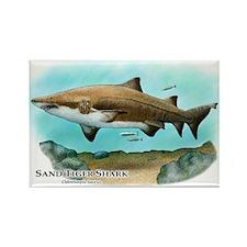 Sand Tiger Shark Rectangle Magnet