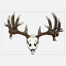 White tail deer skull drawing