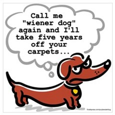 Wiener dog (floors) Framed Print