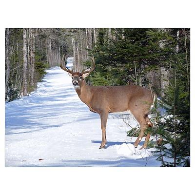 Winter Buck Poster