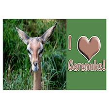 Helaine's Gerenuk